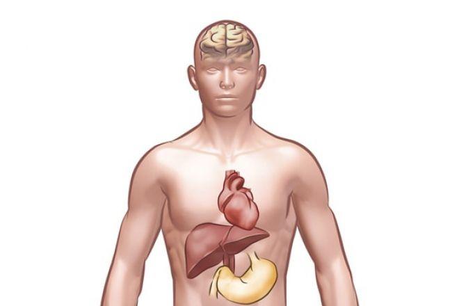 Resultado de imagem para organismo